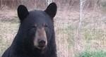 Change Management, Goldilocks and the Three Bears
